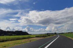 雨上がりの緑道