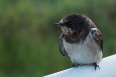 手賀沼を眺める小鳥