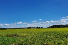 夏の田園風景と緑道