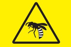 ※ハチにご注意ください